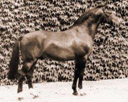 horse Ehrensold (Westphalian, 1969, from Ehrenschild)