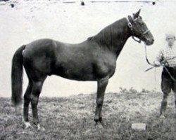 horse Tristan xx (Thoroughbred, 1878, from Hermit xx)