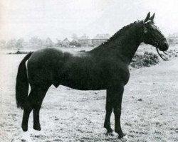 horse Faehnrich (Holsteiner, 1953, from Fachmann)