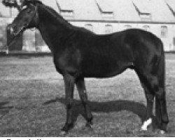 horse Der Löwe xx (Thoroughbred, 1944, from Wahnfried xx)
