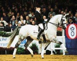 horse Granulit (Hessian Warmblood, 1992, from Grannus)
