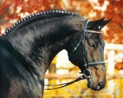horse Ravallo (Hanoverian, 1986, from Raphael)