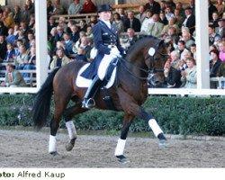 horse Laurentianer (Hanoverian, 1994, from Lauries Crusador xx)