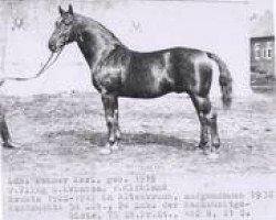 horse Feiner Kerl (Hanoverian, 1919, from Fling)