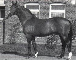 horse Wendekreis (Hanoverian, 1967, from Ferdinand)