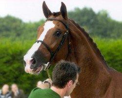horse Turbo van het Gestelhof (Belgian Warmblood, 1996, from Darco)