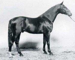 horse Reichsgraf (Holsteiner, 1982, from Rinaldo)