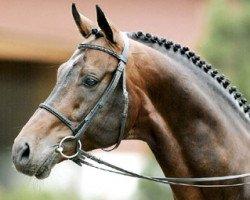 horse Lanciano (Westphalian, 1990, from Landino)