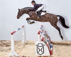 jumper Crawford 5 (Holsteiner, 2002, from Corrado I)