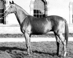 horse Rantzau xx (Thoroughbred, 1946, from Foxlight xx)