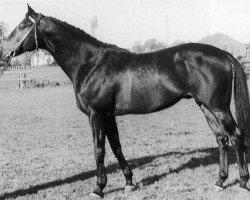 horse Marlon xx (Thoroughbred, 1958, from Tamerlane xx)