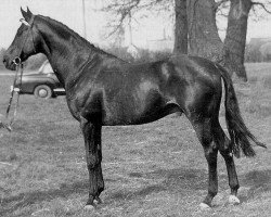 horse Cottage Son xx (Thoroughbred, 1944, from Young Lover xx)