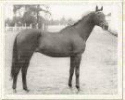 horse Anblick xx (Thoroughbred, 1938, from Ferro xx)