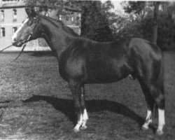 horse Abglanz (Trakehner, 1943, from Termit)