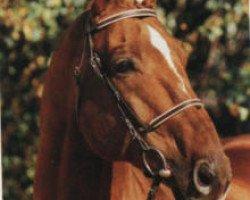 horse Hitchcock (Hanoverian, 1983, from Hill Hawk xx)