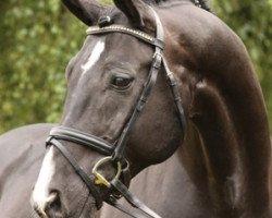 horse Rotspon (Hanoverian, 1995, from Rubinstein I)