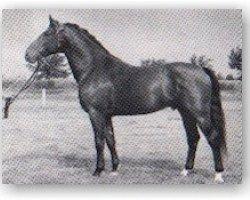 horse Fax I (Holsteiner, 1954, from Fanatiker 3219)