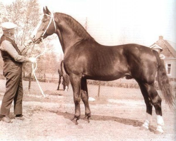 horse Farn (Holsteiner, 1959, from Fax I)