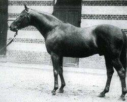 horse Teddy xx (Thoroughbred, 1913, from Ajax xx)