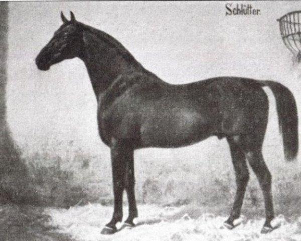 horse Schlütter (Hanoverian, 1867, from Nabocklish)