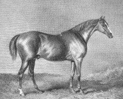 horse Rubens xx (Thoroughbred, 1805, from Buzzard 1787 xx)