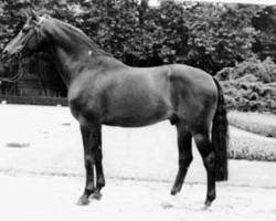 horse Fidelio (Hanoverian, 1978, from Furioso II)
