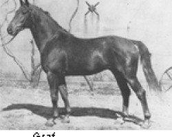horse Graf (Hanoverian, 1941, from Goldfisch II)