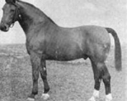 horse Heidelberg (Holsteiner, 1941, from Heimburg)