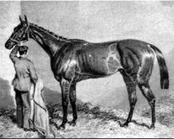 horse Newminster xx (Thoroughbred, 1848, from Touchstone xx)