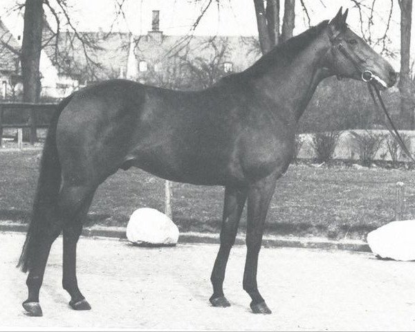 horse Angelo xx (Thoroughbred, 1962, from Oliveri xx)