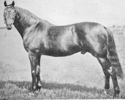 horse Musket xx (Thoroughbred, 1867, from Toxophilite xx)