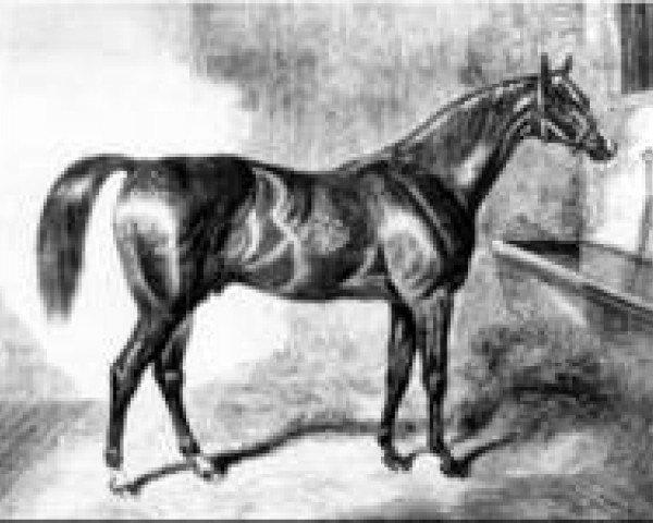 horse Venison xx (Thoroughbred, 1833, from Partisan xx)