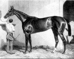 horse West Australian xx (Thoroughbred, 1850, from Melbourne xx)