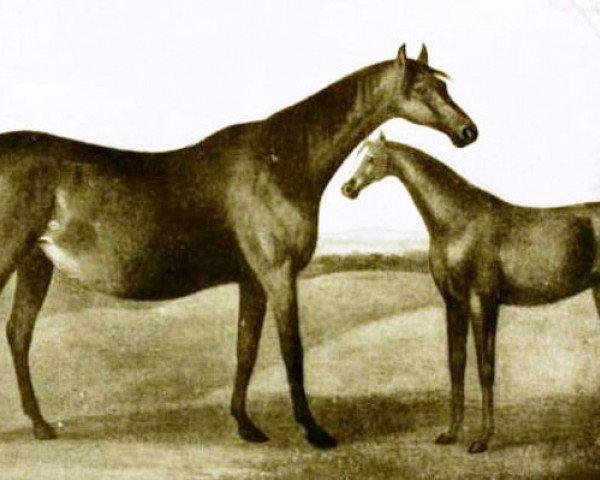 horse Spilletta xx (Thoroughbred, 1749, from Regulus xx)