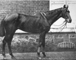 horse Buccaneer xx (Thoroughbred, 1857, from Wild Dayrell xx)