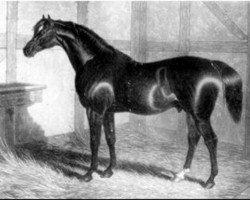 horse Partisan xx (Thoroughbred, 1811, from Walton xx)