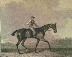horse Tramp xx (Thoroughbred, 1810, from Dick Andrews xx)