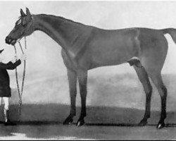 horse Regulus xx (Thoroughbred, 1739, from Godolphin Arabian)