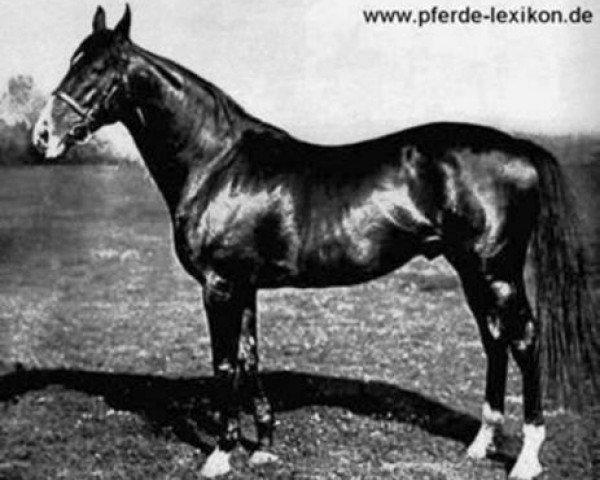 horse Fels xx (Thoroughbred, 1903, from Hannibal xx)