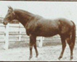 horse Nuage xx (Thoroughbred, 1907, from Simonian xx)