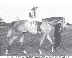 horse Rittersporn xx (Thoroughbred, 1917, from Saint Saulge xx)
