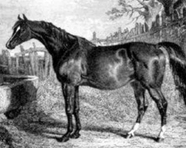 horse Emma xx (Thoroughbred, 1824, from Whisker xx)