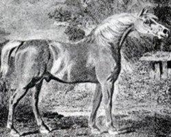 horse Precipitate xx (Thoroughbred, 1787, from Mercury xx)