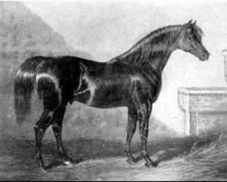horse Walton xx (Thoroughbred, 1799, from Sir Peter Teazle xx)