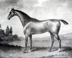 horse Whiskey xx (Thoroughbred, 1789, from Saltram xx)