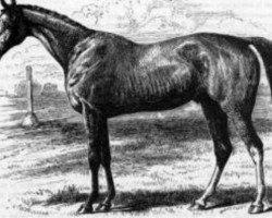 horse Orlando xx (Thoroughbred, 1841, from Touchstone xx)