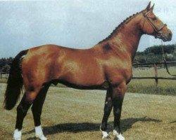 horse Almé Z (Selle Français, 1966, from Ibrahim AN)