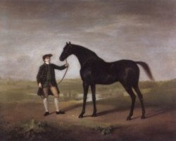 horse Snap xx (Thoroughbred, 1750, from Snip xx)