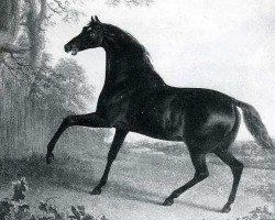 horse Sir Peter Teazle xx (Thoroughbred, 1784, from Highflyer xx)