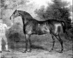 horse Orville xx (Thoroughbred, 1799, from Beningbrough xx)
